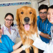 Stock Photo: Group of doctors at vet
