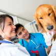 Doctors checking a dog - Stock Photo