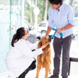 Stock Photo: Mtaking dog to vet
