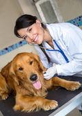 Doktor bir köpeğin denetleme — Stok fotoğraf