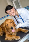 Doctor checking a dog — Stock Photo