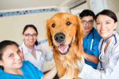 Cute dog at the vet — Stock Photo