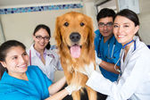 Group of doctors at the vet — Stock Photo