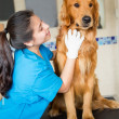 Stock Photo: Dog at vet