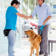 Mtaking dog to vet — Stock Photo #23294896