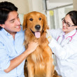 Dog at the vet - Stock Photo