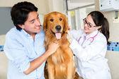 Perro en el veterinario — Foto de Stock