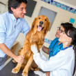 Man taking a dog a the vet — Stock Photo