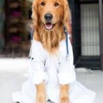 Dog as the vet — Stock Photo #23424836