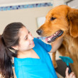 Dog at the vet — Stockfoto