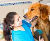 Dog at the vet — Stock Photo