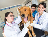 Doctor examining a dog — Stock Photo