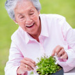 Senior woman gardening — Stock Photo #25418607
