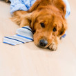 Tired dog in a business suit — Stock Photo
