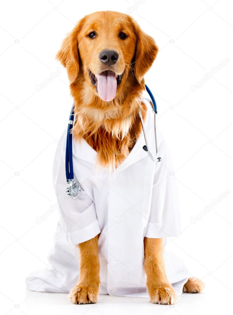 Dog Cat Doctors With White Back Ground