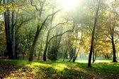 Vroege herfst park — Stockfoto