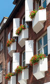 Flowers in planters — Foto Stock