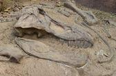 Dinosaur fossil — Stock Photo