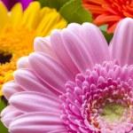 Gerberas flowers — Stock Photo #15342163