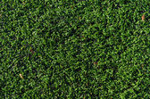 Artificial grass field — Stock Photo