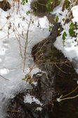 Small brook in winter — Stock Photo