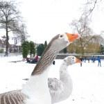 Domestic goose — Stock Photo #24226311