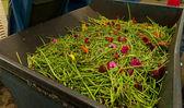 Flower leaves waste — Stock Photo