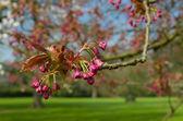 Flores de color rosa — Foto de Stock