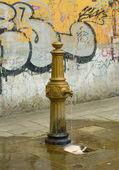 Calle grifo — Foto de Stock