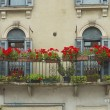 Balcony with flowers — Stock Photo