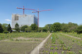 Allotment in city — Stock Photo