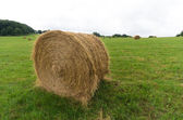 Hay bales in a meadow — Stock Photo