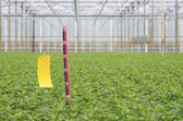Ruler in greenhouse — Stock Photo