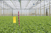 Ruler in greenhouse — 图库照片
