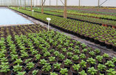 Young plants in greenhouse — Foto Stock