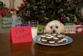 Puppy Checking Out Christmas Cookies — Stock Photo