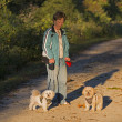 Stock Photo: Adult WomWalking Her Two Puppie At Sunset