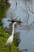 White egret near the lake — Stock Photo