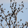 Stock Photo: Tree of pigeons in Jaipur