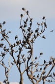 Tree of pigeons in Jaipur — Stock Photo