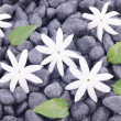 Foto Stock: Five white jasmine flowers and leaves over zen stones background