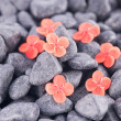 Ixora Prince of Orange flowers on black zen stones — Stock Photo
