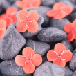 Ixora Prince of Orange flowers on black zen stones extreme close up — Stock Photo