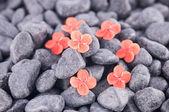 Ixora Prince of Orange flowers on black zen stones — Stock Photo