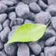 Stock Photo: Green leaf on black zen stones background