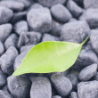 Foto de Stock  : Green leaf on black zen stones background