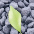 Stock Photo: Green leaf on black zen stones