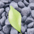 Green leaf on black zen stones — Stock Photo