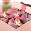 Red zen stones in a bronze gift box with red and yellow flowers — Stock Photo