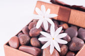 Wellness gift in a bronze box with red zen stones and jasmine flowers closeup — Stock Photo